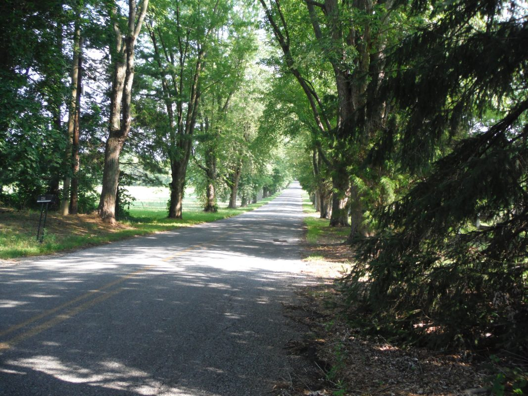 Tree lined road with sunlight