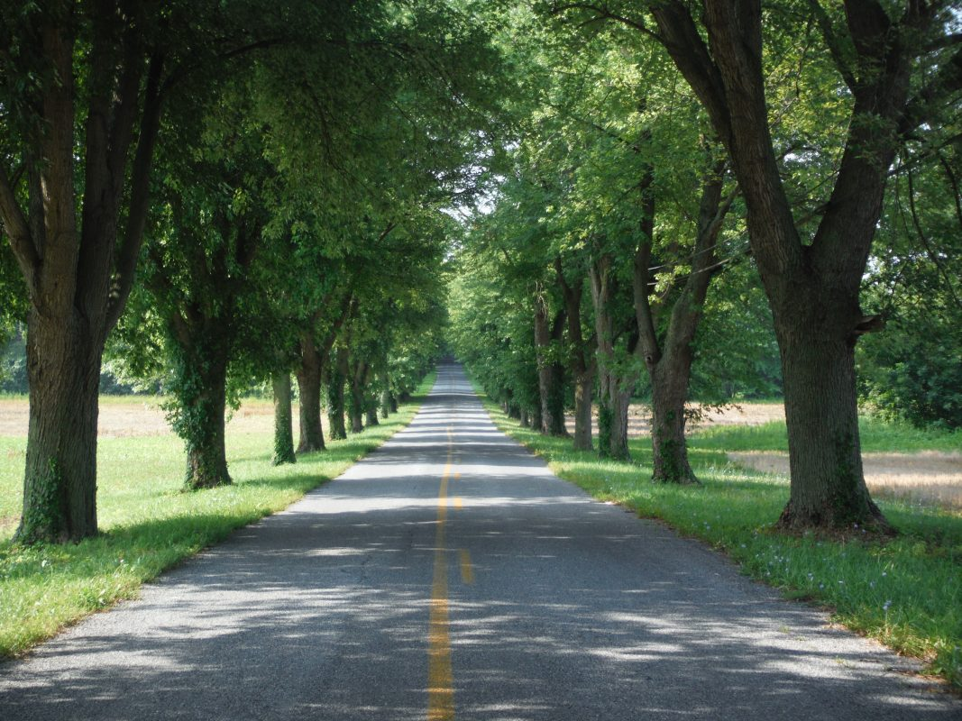 Tree lined driveway in summer